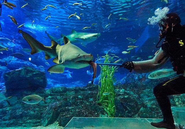 Busan-Nadar-Con-Tiburones