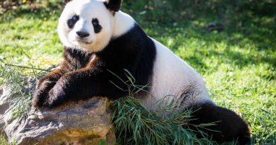 Visita el zoológico de Beauval: entradas, precios, horarios